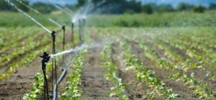 """SICCITA': """"Anche l'agricoltura può combattere il cambiamento climatico"""""""