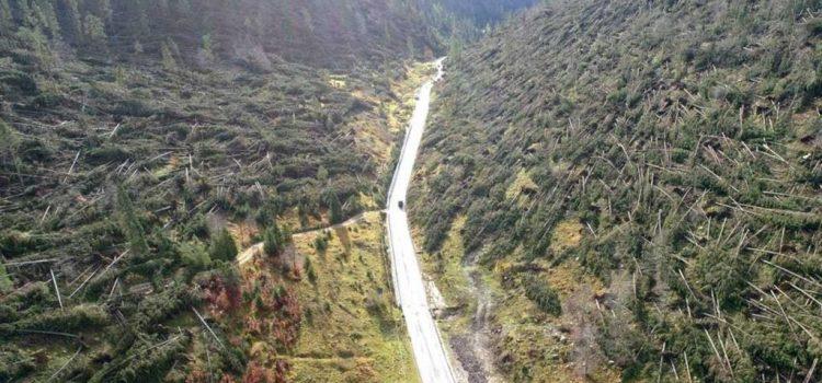 """CLIMA, VENTO: """"A che punto sono le azioni a tutela dei boschi dolomitici dopo la tempesta Vaia?"""""""