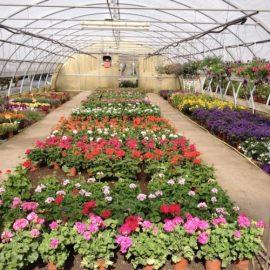 """SETTORE FLOROVIVAISTICO: """"Consentite produzione, trasporto e commercio di piante e fiori"""""""