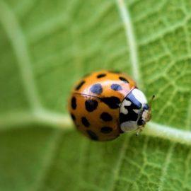 """22 MAGGIO: """"Giornata mondiale della biodiversità"""""""