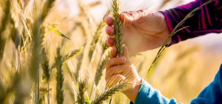 """GOVERNO: """"Italia sia modello agricolo per la sostenibilità"""""""